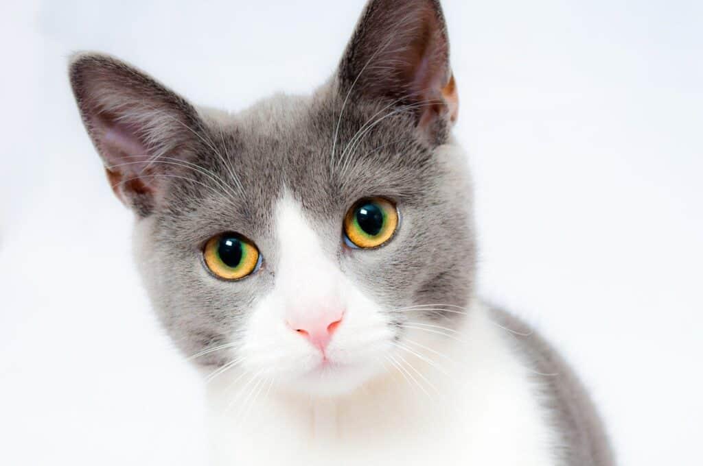 ביטוח חתולים