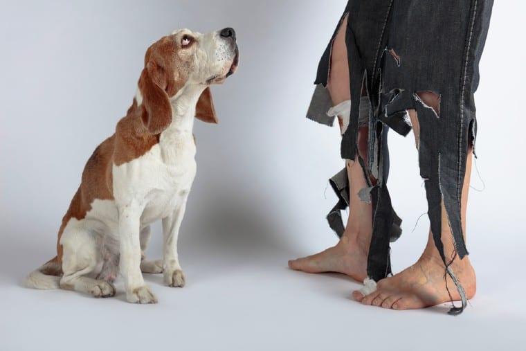 ביטוח צד ג' לכלב