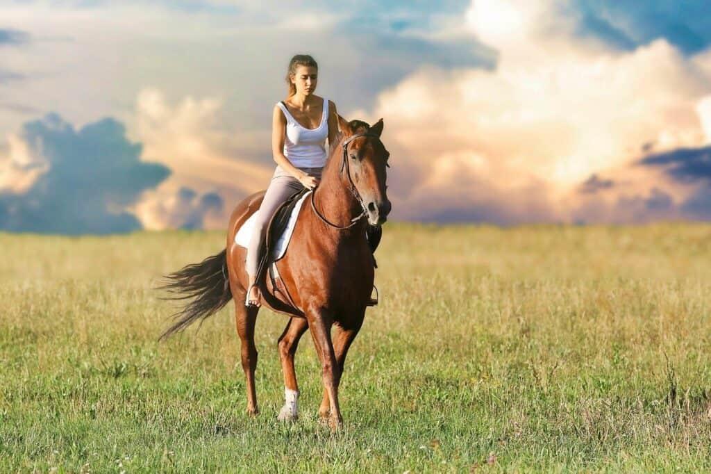 ביטוח סוסים