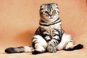טיפים לגידול חתולים