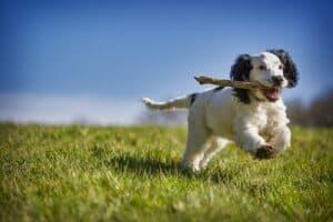 חוק הכלבים - פעילות גופנית לכלב