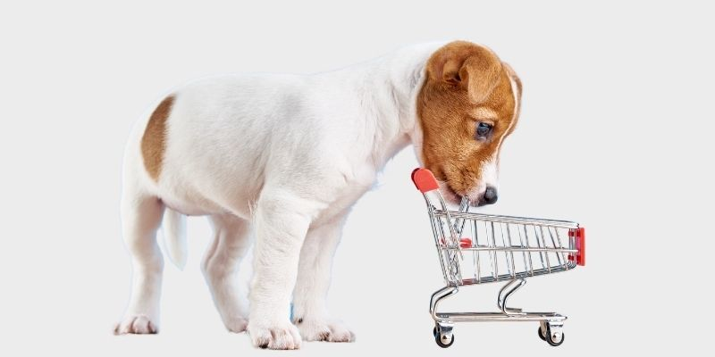 ביטוח חנות חיות