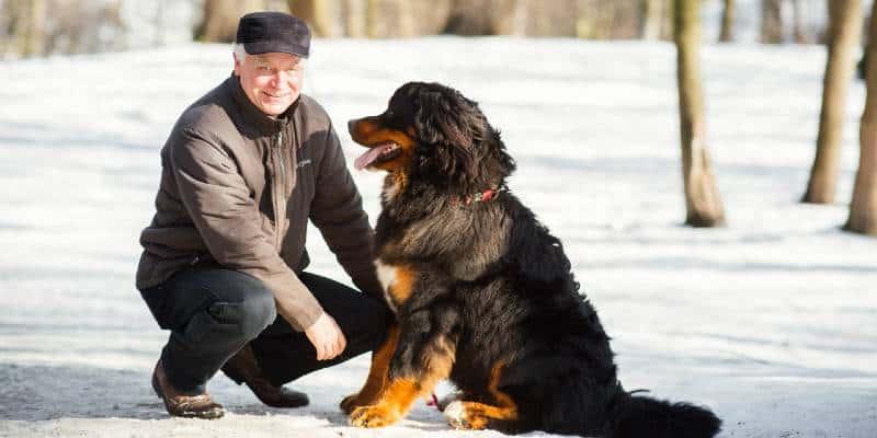 כלב ברנזי הרים