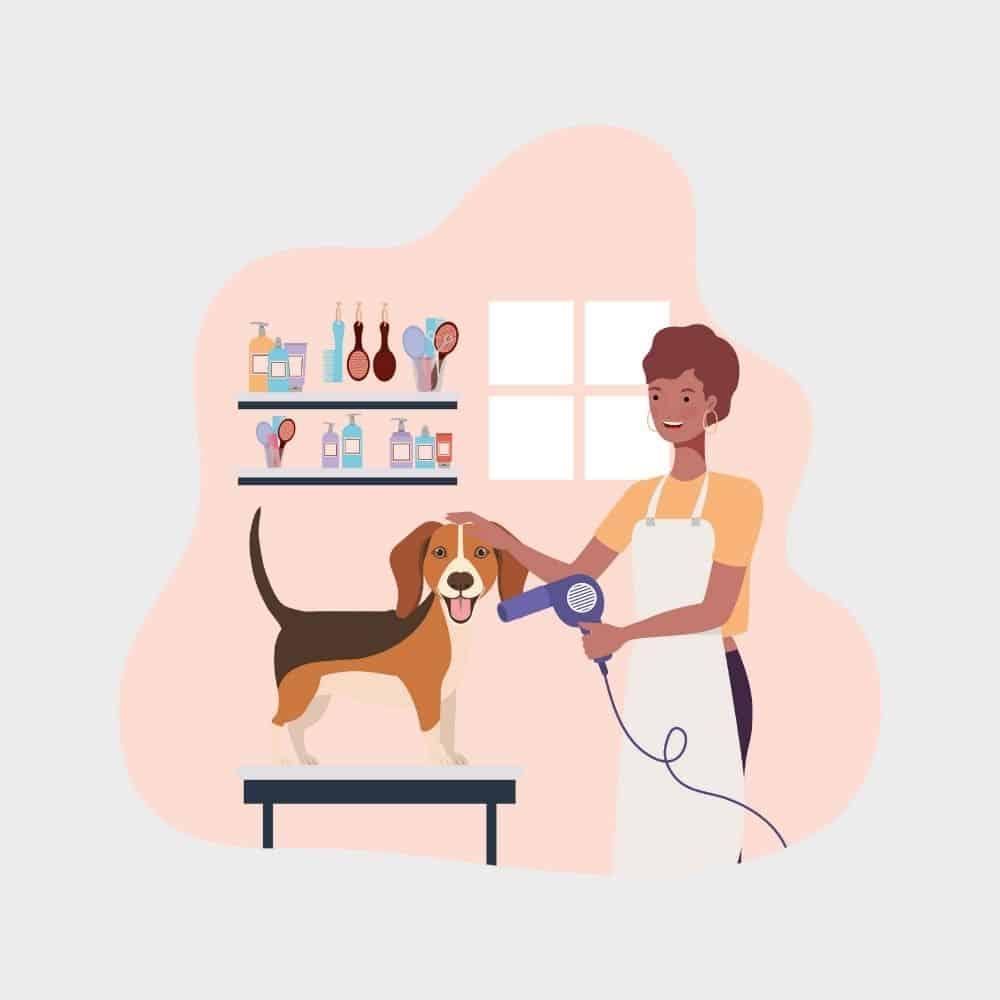 ביטוח מספרת בעלי חיים