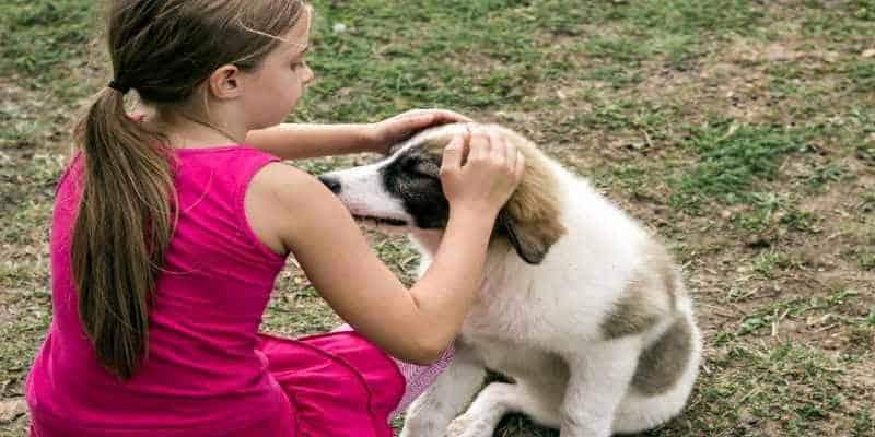 אימוץ כלבים בחולון - גג לחיות