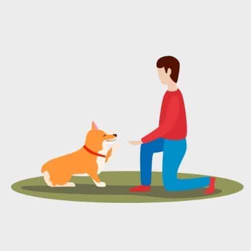ביטוח למאלף כלבים