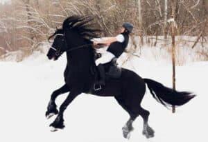 סוס פריזיאן