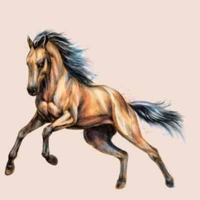 סוגי סוסים