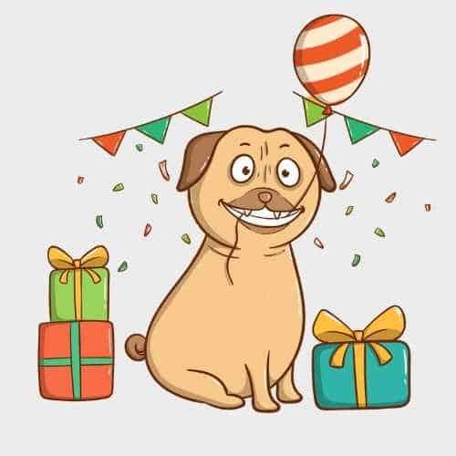 כמה שנים חיי כלב?